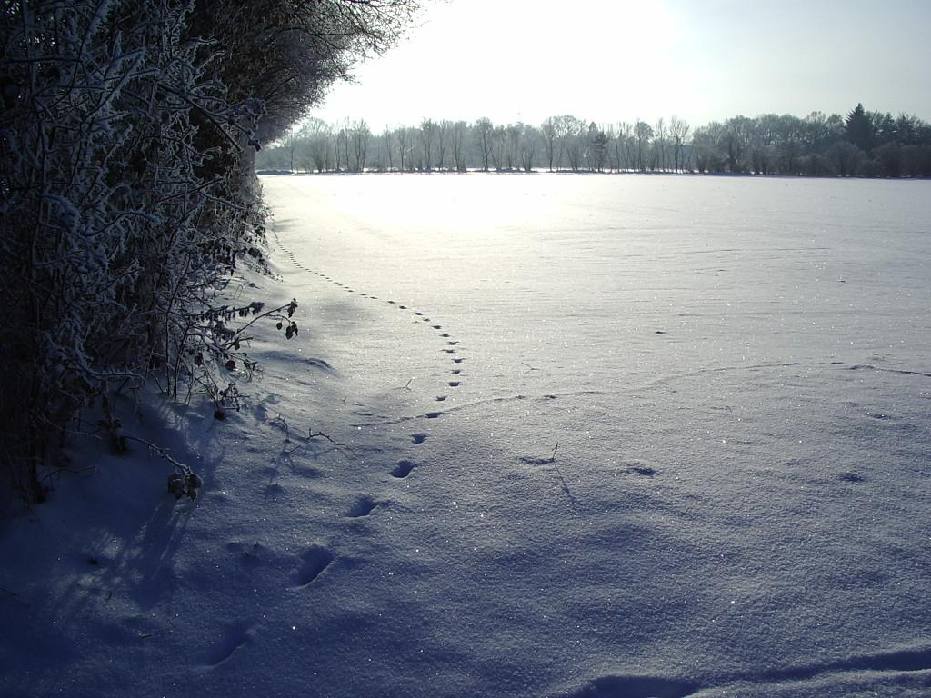 Winter | schokofisch.de