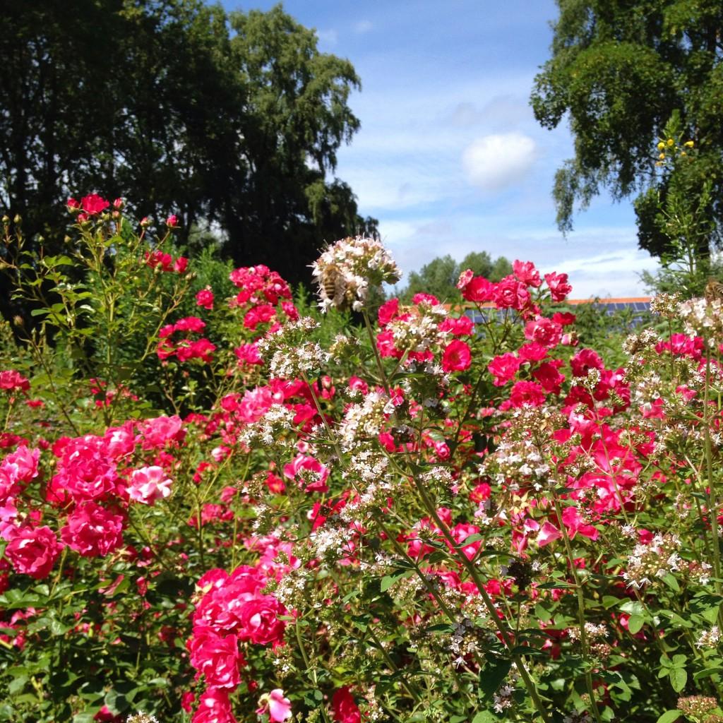 Blumenwiese | schokofisch.de